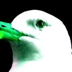 Seagull - uso-privato