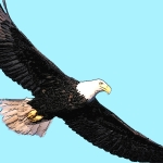 Eagle (Good Luck) - uso-privato