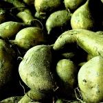 Wipi Deru (Potato Song) - uso-privato