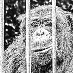 Zoo (Instrumental) - uso-privato
