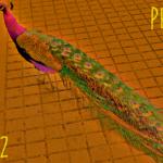 Peacock (02) - uso-privato